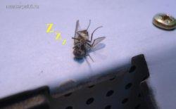 сушеная муха внутри монитора
